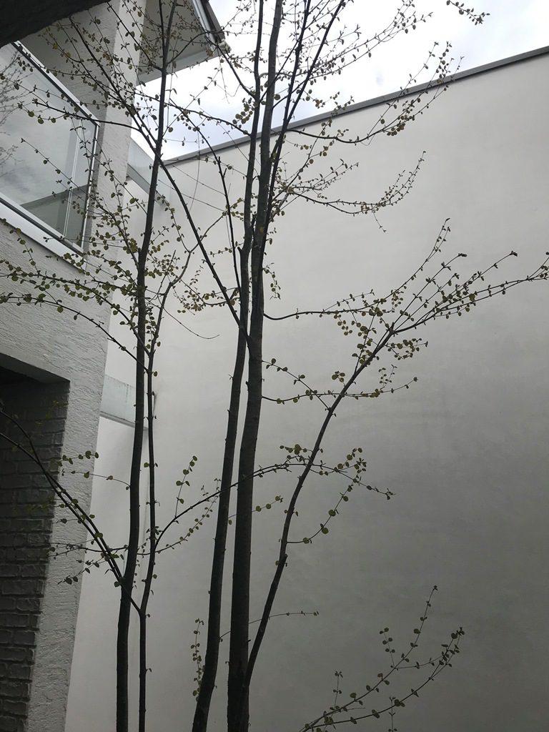 季節を感じる中庭