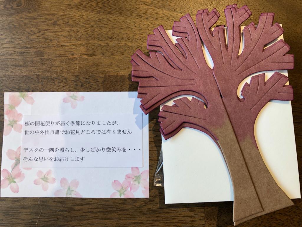 桜の便りが届きました。