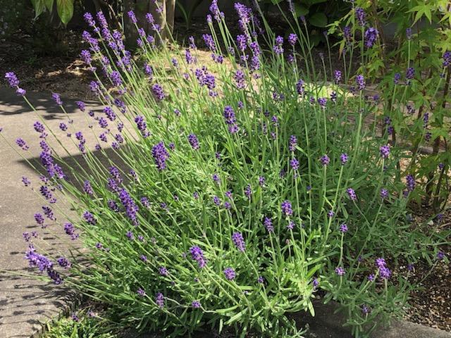 プロホームのお庭の花たち・・・